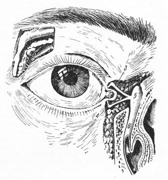 Вспомогательные аппараты глаза